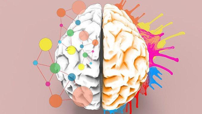 Stanmore Public School Brain Hemispheres