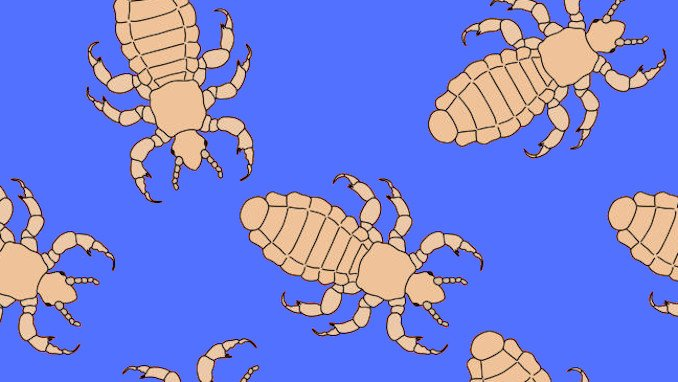 Stanmore Public School Head Lice